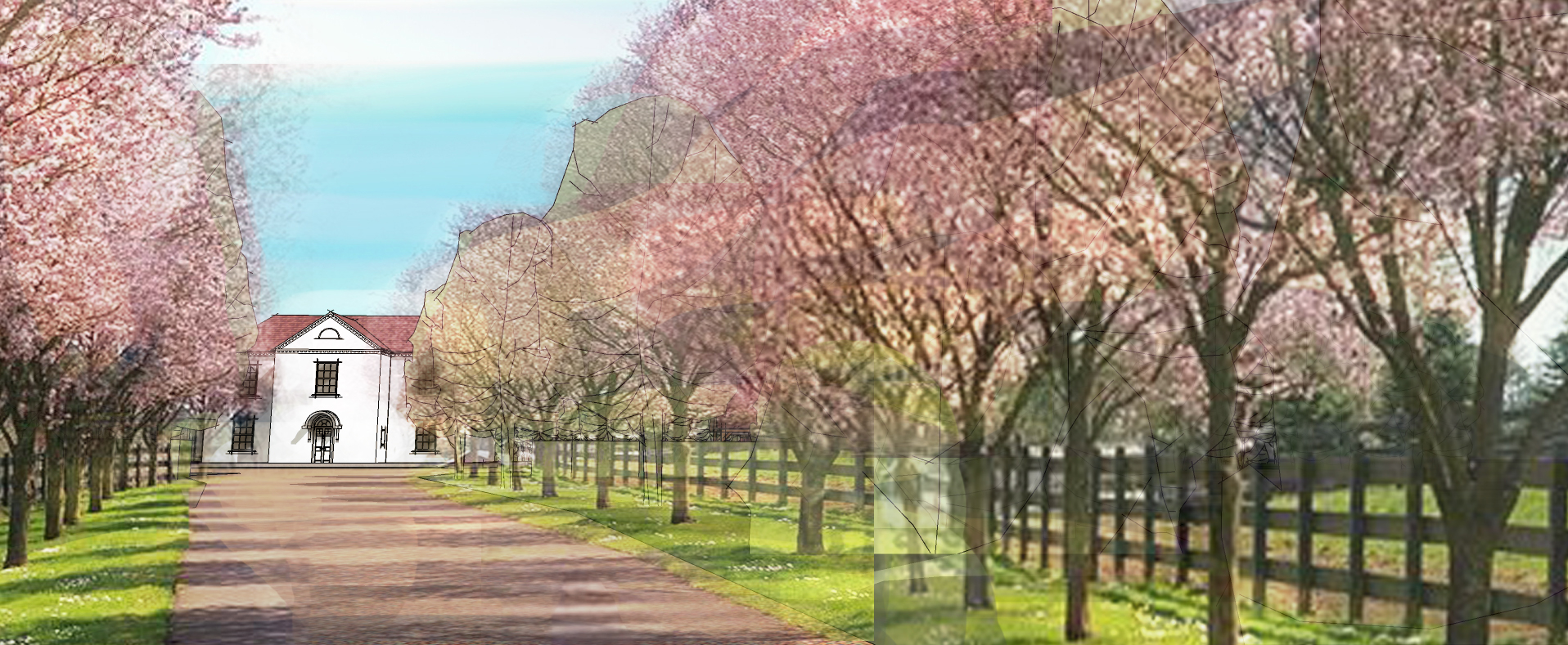 3D Visualisation or architectural project alongside cherry trees